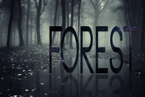 mist nature forest selective coloring typography reflection digital art