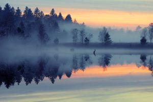 mist sky forest reflection water landscape nature lake sunset trees