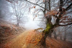 mist trees nature dirt road path forest