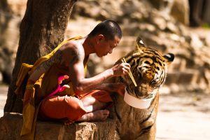 monks animals tiger buddhism