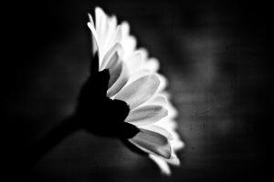 monochrome plants flowers nature