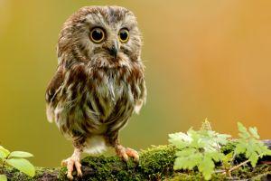 moss animals birds owl