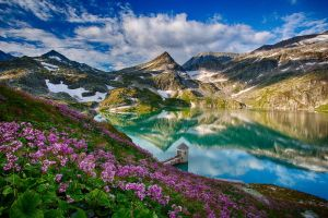 mountains flowers landscape nature reflection lake