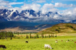 mountains grass clouds animals cow nature landscape
