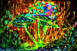 mushroom psychedelic colorful