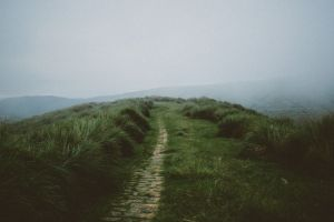 muted path landscape faded nature mist green grass