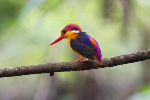 nature animals small birds