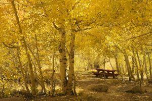 nature bench yellow fall
