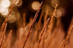 nature bokeh depth of field