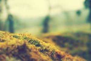 nature bokeh macro moss plants