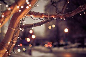 nature city bokeh cityscape lights winter urban christmas trees depth of field
