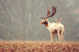 nature deer animals fawns