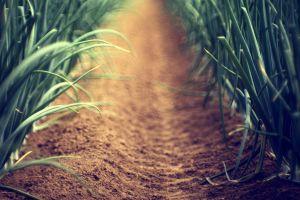 nature depth of field plants