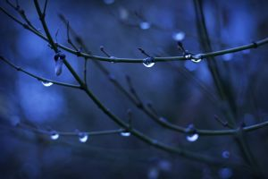 nature depth of field twigs plants water drops