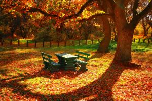 nature fall bench forest trees