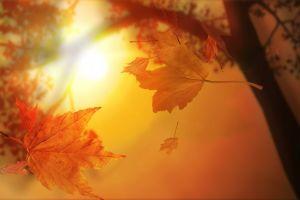 nature fall macro leaves
