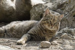 nature feline cats animals