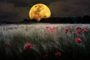 nature flowers digital art moon
