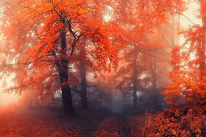 nature forest fall mist