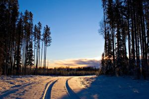 nature forest snow winter sunset trees