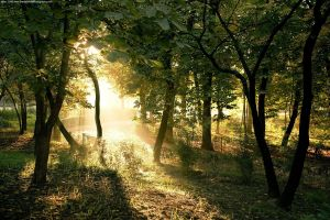 nature forest trees plants sunlight