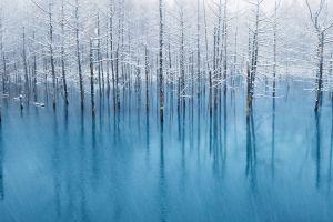 nature ice trees frozen lake
