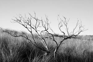 nature landscape branch monochrome plants