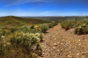 nature landscape shrubs national park california dirt road desert
