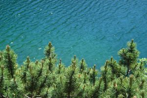 nature landscape water pine trees