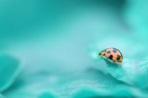 nature leaves insect ladybugs animals