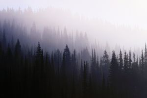 nature mist forest trees