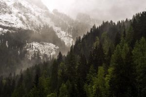 nature mountains forest pine trees snow mist