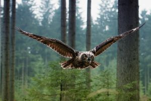 nature owl owl flying landscape trees green animals birds brown eyes
