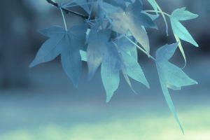 nature plants branch macro leaves depth of field blue