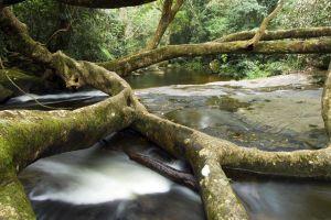 nature river forest landscape plants trees