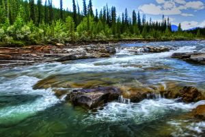 nature river stream landscape trees water