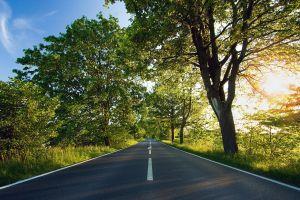 nature road landscape field trees sunlight