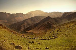 nature sheep hills animals field landscape