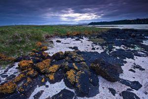 nature sky plants blue landscape