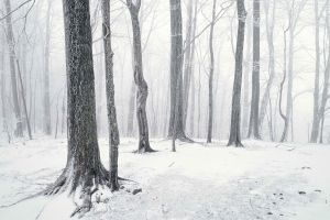 nature snow trees forest landscape winter