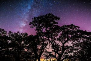 nature stars galaxy trees