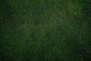 nature texture plains green grass
