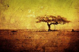 nature trees landscape grunge photo manipulation