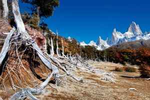 nature trees landscape wilderness mountains