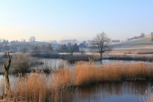 nature trees morning field reeds pond frost landscape farm lake