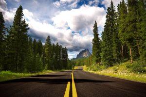 nature trees road canada