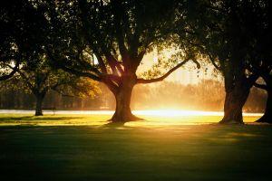 nature trees sunset