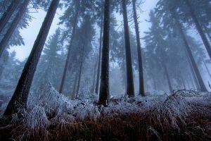 nature trees winter mist white