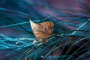 nature twigs macro plants leaves