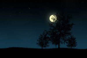 night trees moon